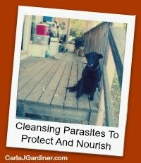 Cleansing Parasites to Protect and Nourish