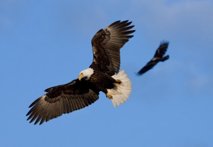 How to Fly with Eagles and Dodge the Pecking Order