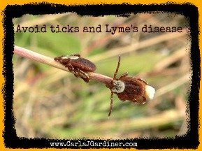 How to Avoid Ticks and Lyme's Disease a Buggy Proposition